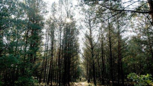 Die Sonne verleiht der Strecke im Wald bei Zechow eine magische Stimmung.