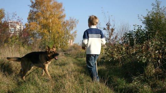Hund in Gelsenkirchen: Der Junge spielte gerade mit Freunde, als der Schäferhund angriff. (Symbolbild)
