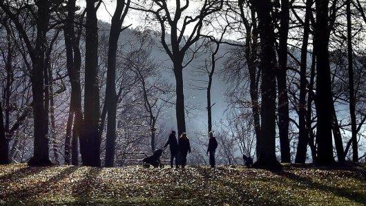 Ein Fuchs ließ Fußgänger und Hunde in Recklinghausen (NRW) ziemlich verstört zurück. (Symbolbild)
