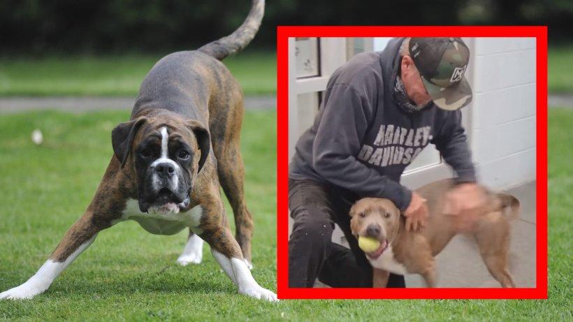 Hund seit über 200 Tagen vermisst – dann ändert ein Video plötzlich alles