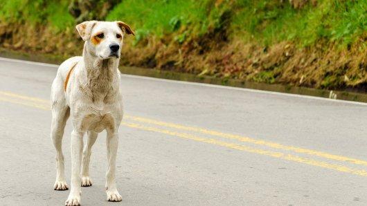 Hund auf A59: Plötzlich lief ein Vierbeiner über die Autobahn. (Symbolbild)