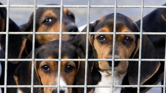 In Hagen (NRW) stehen mehrere Tierquäler vor Gericht, weil sie grausamen Handel mit Welpen begangen haben sollen. (Symbolbild)