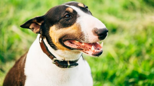 Eigentlich war Gucci ein freundlicher Hund - bis zu einem Tag im Februar. (Symbolbild)