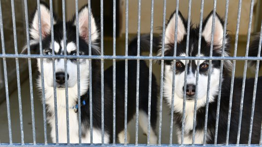 Hund in Bochum: Bei zwei Vierbeinern war die Wiedersehensfreude im Tierheim nicht zu leugnen! (Symbolbild)