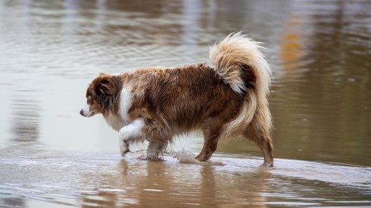 Hund in NRW: Welche Hilfe gibt es nach der Flutkatastrophe für Vierbeiner? (Symbolbild)