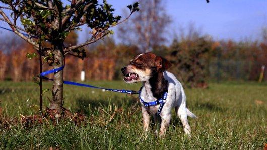 Ein Hund in Dortmund wurde einfach mitten in der Nacht an einem Baum zurückgelassen. (Symbolfoto)