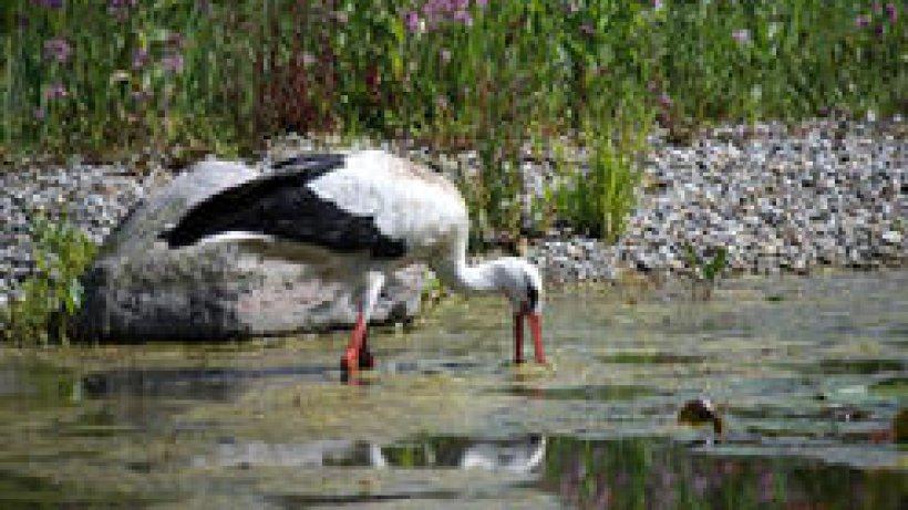 Nordseevögel auf Föhr - derwesten.de