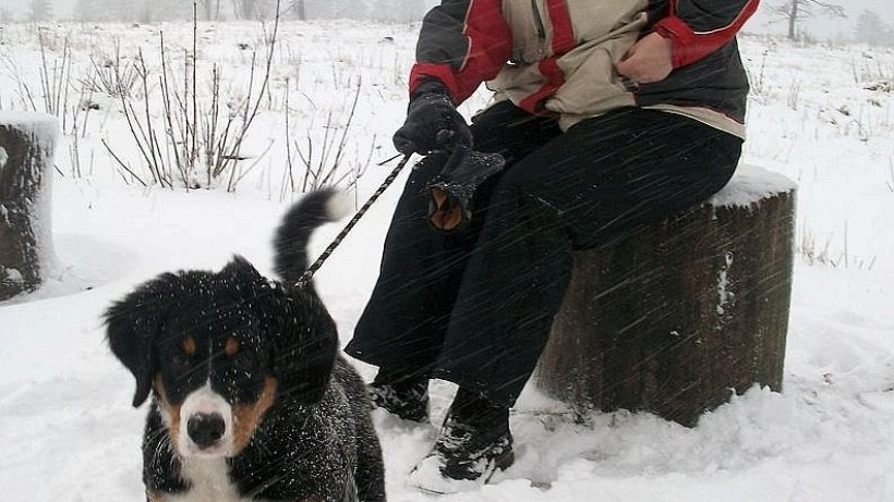 winter 2011 erster schnee im sauerland nachrichten aus brilon marsberg und olsberg. Black Bedroom Furniture Sets. Home Design Ideas