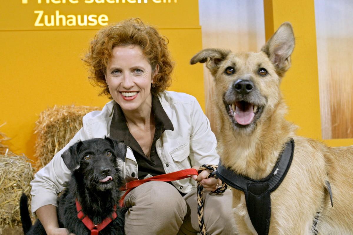 Tiere Suchen Ein Zuhause Wdr Moderatorin Gestorben