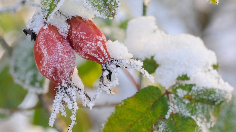 garten frostschutz f r gartenpflanzen erm glicht gem seernte im winter wohnen. Black Bedroom Furniture Sets. Home Design Ideas