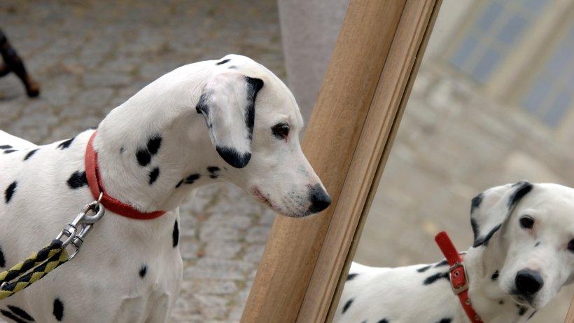 warum sich hunde und katzen nicht selbst im spiegel erkennen tierisches. Black Bedroom Furniture Sets. Home Design Ideas