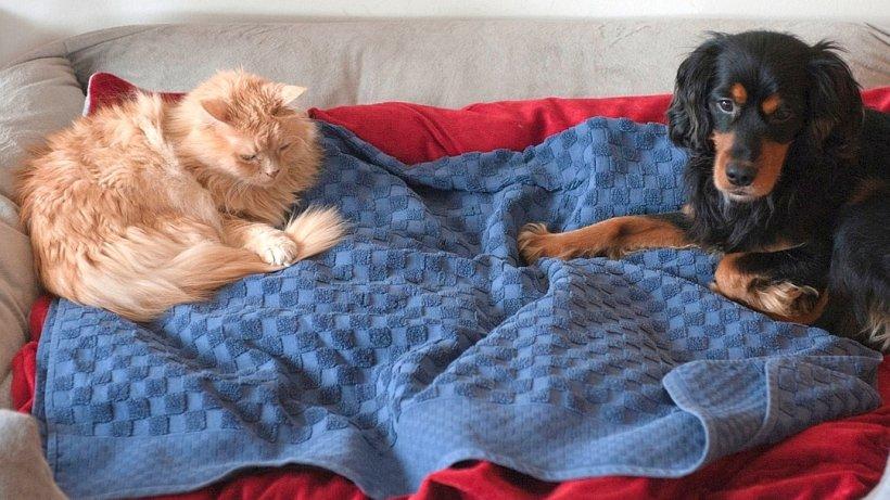 vermieter darf familie aus gelsenkirchen tierhaltung nicht pauschal verbieten gelsenkirchen. Black Bedroom Furniture Sets. Home Design Ideas