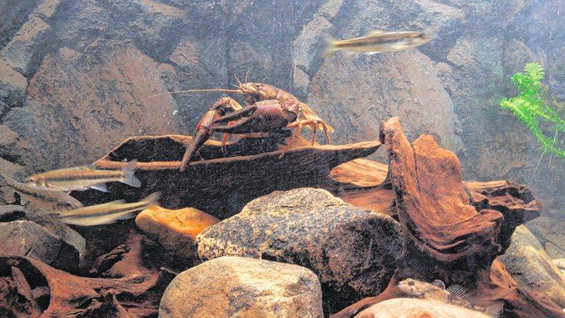Umwelt heimische fische begeistern grundsch ler for Heimische fische