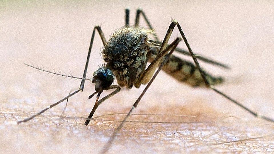 mücken - knoblauch, kerzen, spray - was hilft gegen mücken