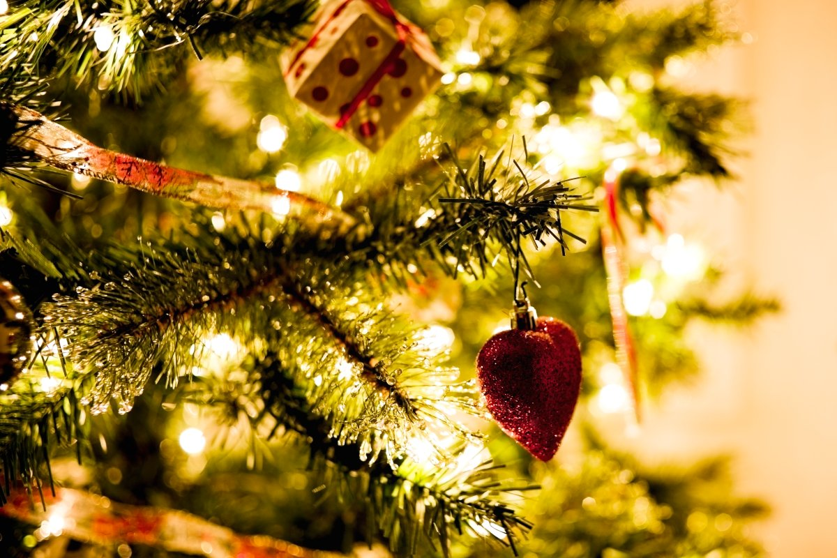 Bvb Weihnachtsbaum.Was Es Rund Um Den Weihnachtsbaum Zu Beachten Gibt Wohnen