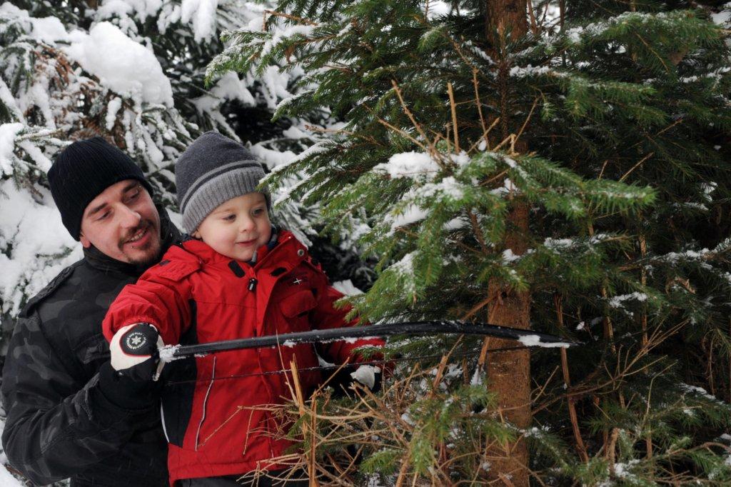 weihnachtsbaum selber schlagen dortmund frohe weihnachten in europa. Black Bedroom Furniture Sets. Home Design Ideas