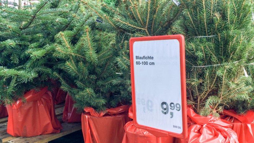 essener baumarkt verkauft bereits weihnachtsb ume essen. Black Bedroom Furniture Sets. Home Design Ideas