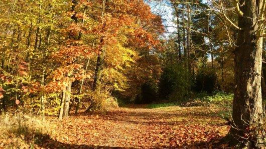 Herbst im Waldgebiet Niederhofer Holz in Dortmund.