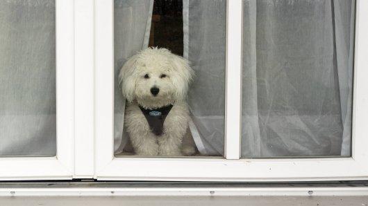 Wie lange kann ein Hund allein bleiben? (Symbolbild)