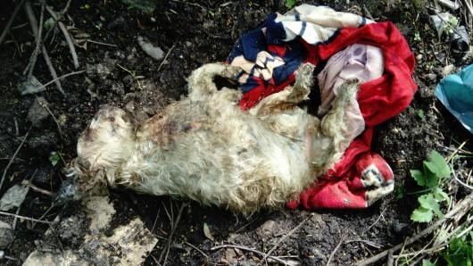 Diesen Hunde-Kadaver wurde in Oberhausen gefunden.