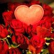 Rote Rosen zum Valentinstag. Aber bitte einfach kaufen. (Symbolbild)