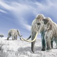 Woolly mammoths, artwork Woolly mammoths. Computer artwork of woolly mammoths (Mammuthus primigenius) and bison (Bison bison) in a snow-covered field. PUBLICATIONxINxGERxSUIxHUNxONLY LEONELLOxCALVETTI/SCIENCExPHOTOxLIBRARY F005/6937 Woolly Artwork Woolly Computer Artwork of Woolly Mammuthus primigenius and Bison Bison Bison in a Snow Covered Field PUBLICATIONxINxGERxSUIxHUNxONLY LEONELLOxCALVETTI SCIENCExPHOTOxLIBRARY F005