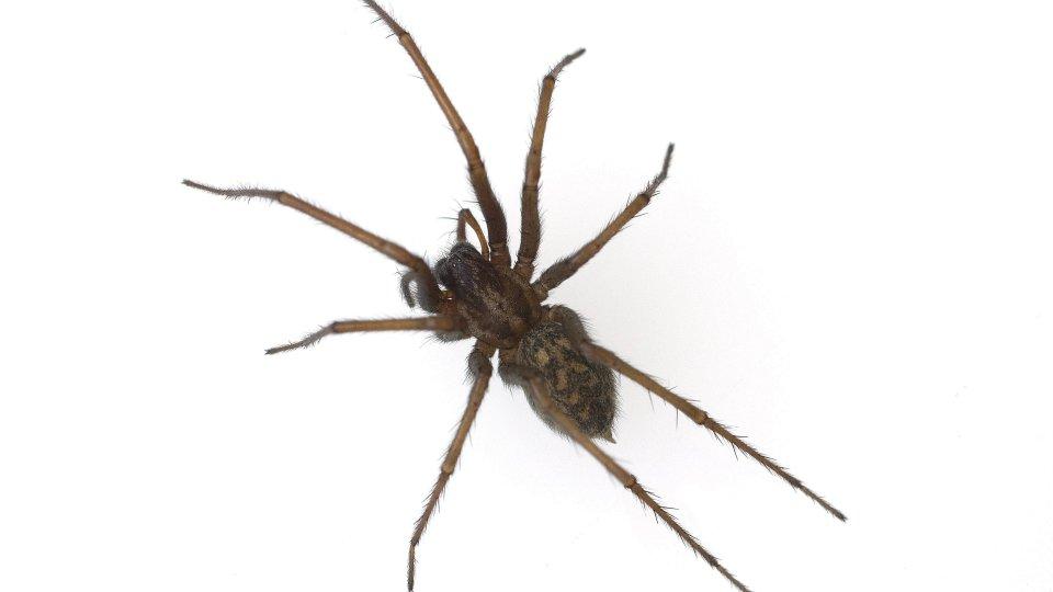 Spinnen Sterben Die Tiere Im Staubsauger Panorama Derwesten De