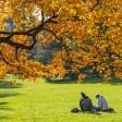 Buche im Herbst, Österreich, Wien, 18. Bezirk, Türkenschanzpark Copyright: xKTHx ALLAT849307 Beech in Autumn Austria Vienna 18 District Turks Hills Park Copyright xKTHx ALLAT849307