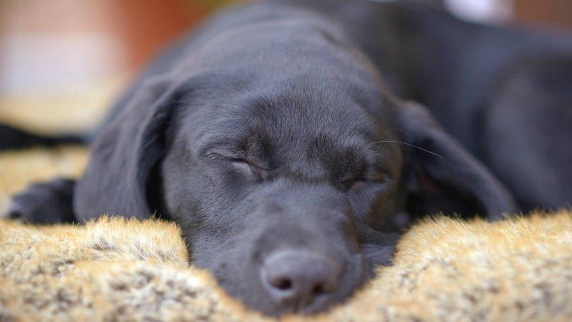 Duisburger Tierärztin So Erkennst Du Ob Dein Hund Krank Ist