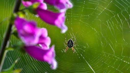 """Ein Brasilianer wollte seine Großeltern besuchen – und wurde von einem """"Spinnenregen"""" überrascht. (Symbolbild)"""