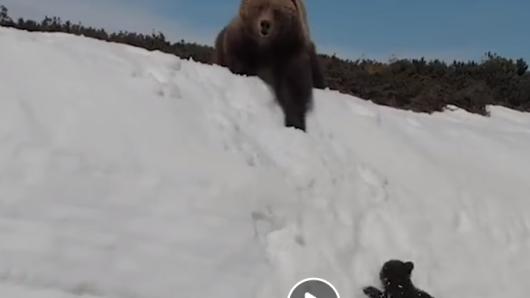 Im Video ist zu sehen, wie ein Bärenjunges um sein Überleben kämpft.