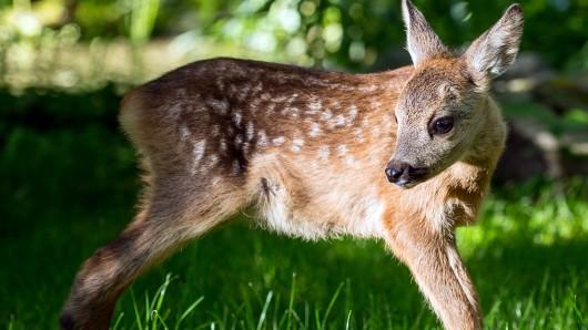 """Ein Wilderer muss im Knast den Film """"Bambi"""" schauen."""