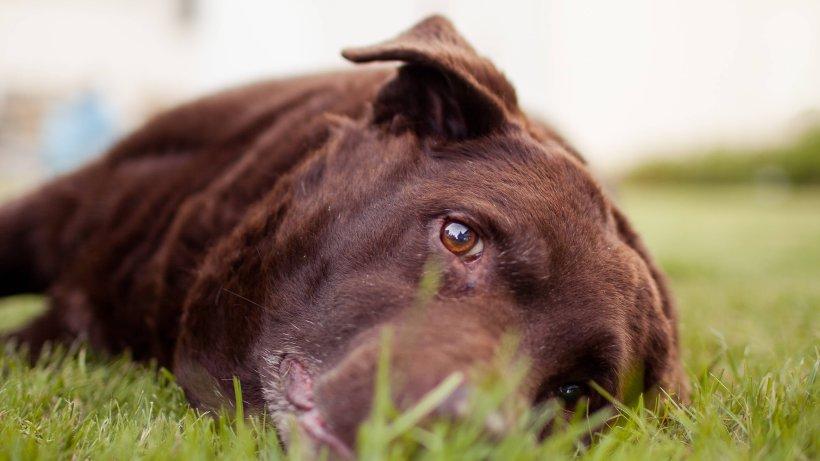 Gefahr für deinen Hund! DIESE beiden neuen Zeckenarten in Deutschland können ihn töten