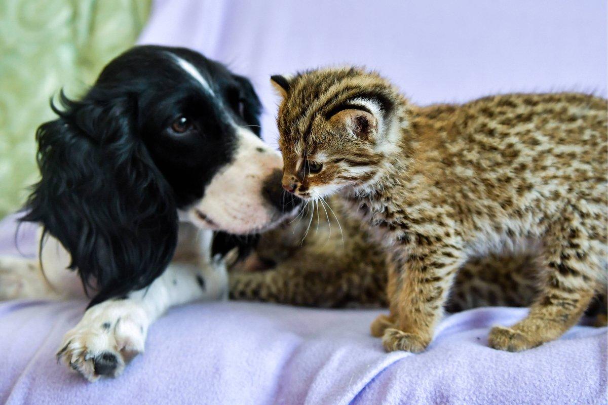 Hund Oder Katze Jetzt Ist Klar Wer Dich Glücklicher Macht