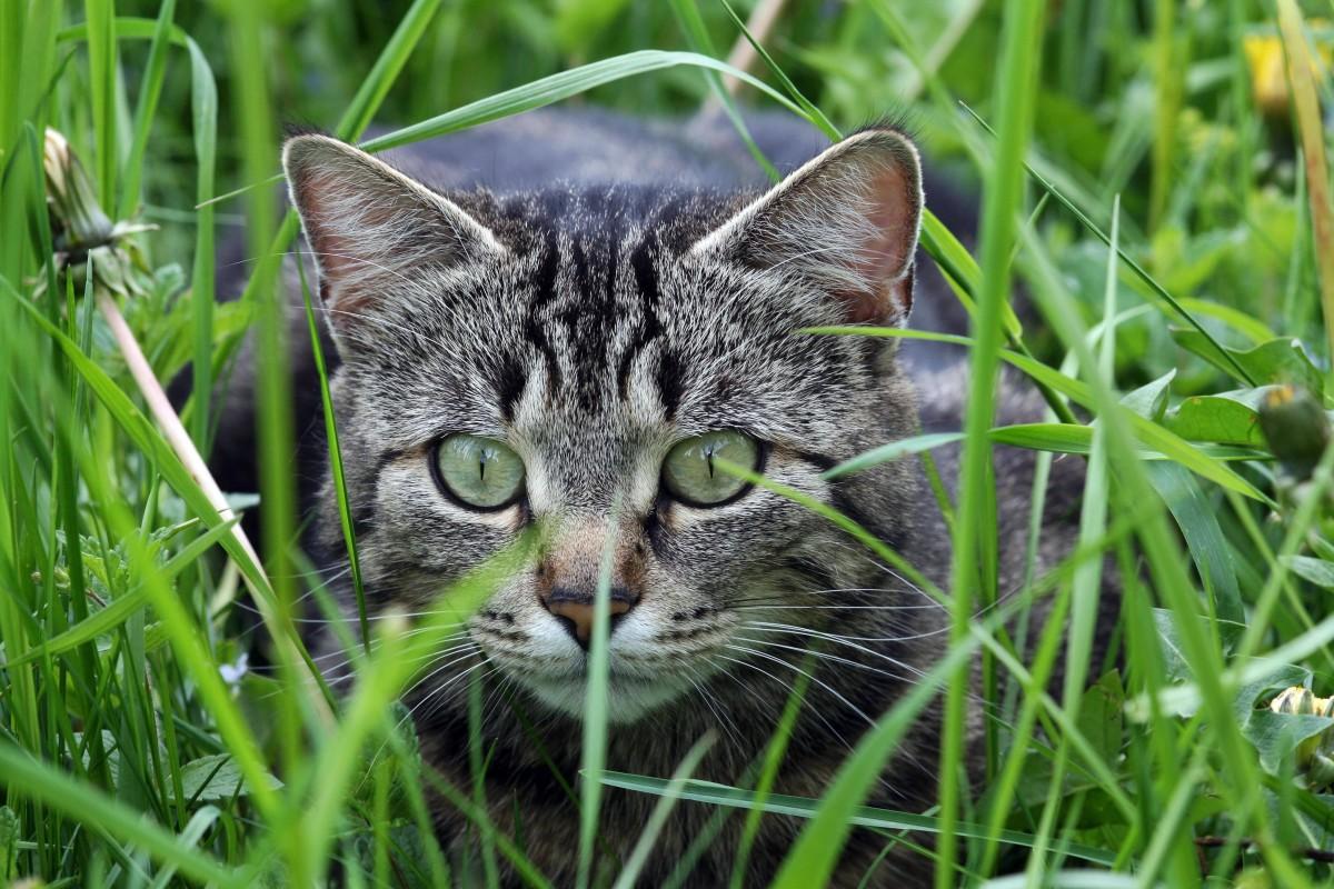 b4c5ea1142e446 Australien lässt 2 Millionen Katzen töten  Das ist der Grund - Panorama -  derwesten.de