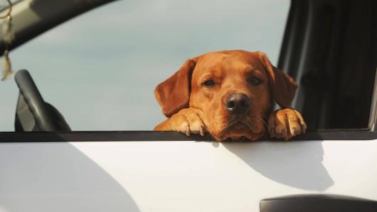 """Als die Frau den """"Hund"""" ihrer Nachbarin sah, traute sie ihren Augen nicht. (Symbolfoto)"""