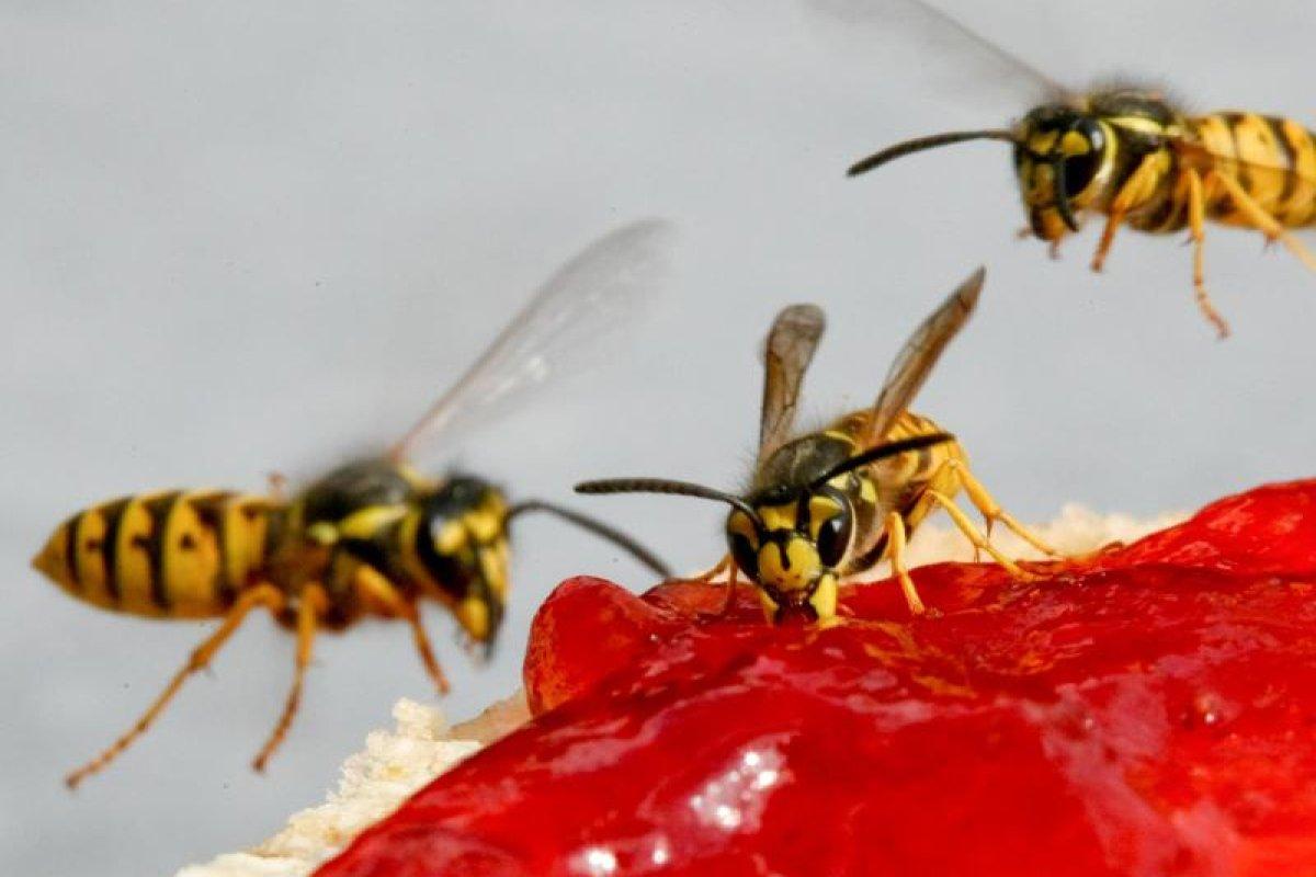 So Verbannen Sie Fruchtfliegen Und Mehlmotten Aus Der Küche