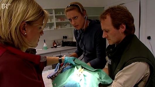 Während der Behandlung überwacht Praktikantin Henrike Herzschlag und Atmung der Eule. Bis ihr plötzlich etwas auffällt...