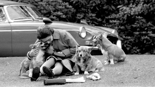 Queen Elizabeth II mit ihren Corgis 1973. (Archivbild)