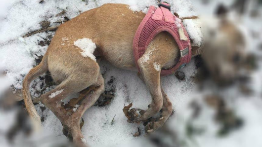 In Schwalmtal / Lüttelforst wurde diese Hunde-Dame am Wochenende tot gefunden.