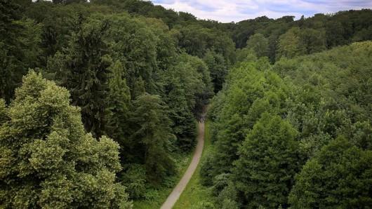 In diesem Waldstück in Velbert soll die 13-Jährige auf dem Heimweg vom Parkbad missbraucht worden sein.