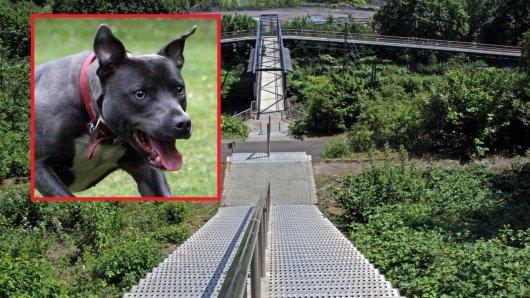 In Bottrop hatte ein Hund für einen schlimmen Unfall gesorgt. (Symbolbild)