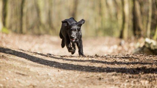 Der Hund rannte aus einem Graben auf die Straße. (Symbolfoto)