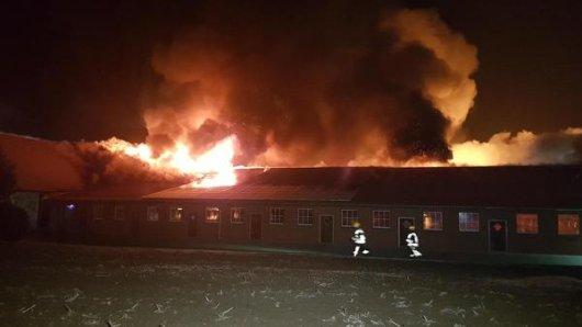 wei Feuerwehrmänner laufen an dem brennenden Stall eines Schweinezüchters vorbei. Bei dem Brand sind rund 2500 Tiere verwendet.