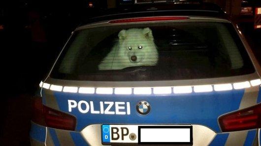 Die Bundespolizeiinspektion Aachen konnte den Hund wohlbehalten seiner Besitzerin zurückgeben.