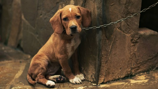 Einem Mann aus Hamm wurde sein Hund geklaut. Das war jedoch nicht sein einziger Verlust. (Symbolbild)