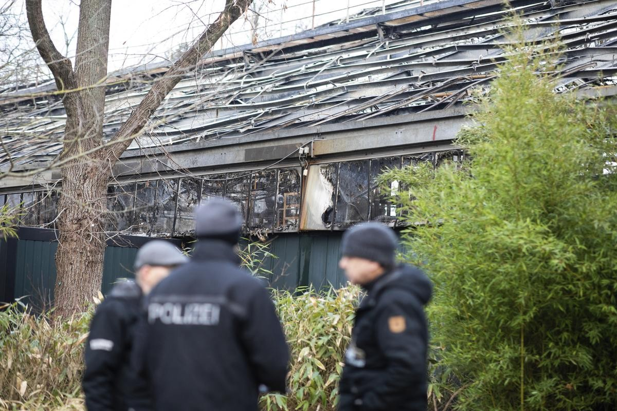 Krefelder Zoo: Gorilla überlebte – Polizist mit drastischer Entscheidung