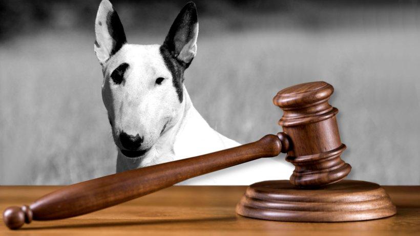 Hund: Bizarrer Streit landet in Münster vor Gericht – es geht um wenige Zentimeter