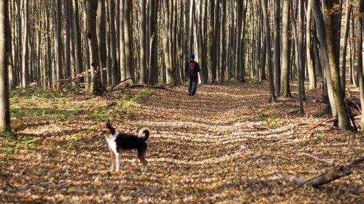 In NRW hat die Begegnung eines Hundebesitzers mit einem Jogger für einen Eklat gesorgt. (Symbolfoto)