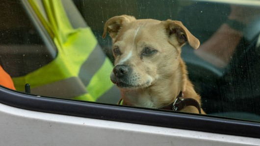 Polizisten machten in NRW eine traurige Hunde-Entdeckung. (Symbolbild)